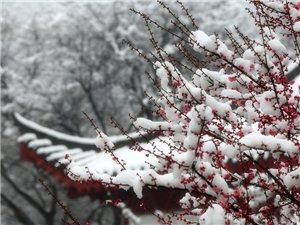 2015.梅园雪景