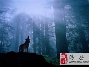 【日记】一匹狼