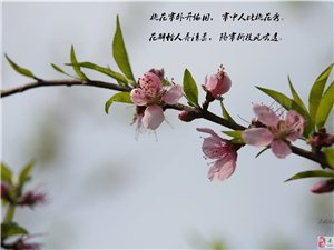 """初春.桃花一组 """"吟咏""""桃花行"""