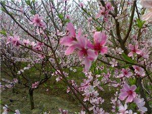 春天的气息