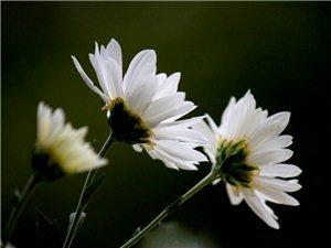 花卉欣�p