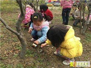要把植树根植于孩子们心中