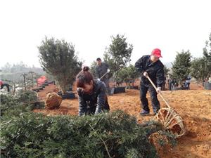 3.12全国植树节,汨罗爱心之家志愿者协会在行动