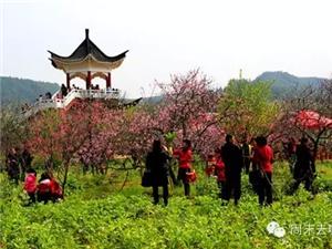 约上伙伴带上家人一起自驾游去赣县桃花岛赏花去!