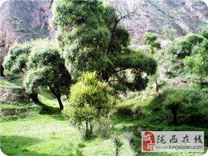 陇西美景――暖泉沟