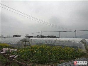 瑞昌市绿色果业家庭农场