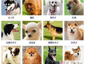 为什么喜欢狗狗
