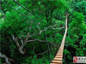 蜜月度假首选全球十大森林
