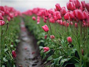 蜜月就想和你在最美的25条小路走到尽头