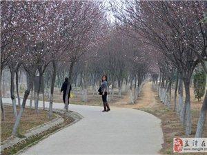 公园花开————-樱花