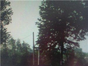 G204国道99.8公里处测速仪