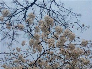 春天�砹耍�春天的花美美的