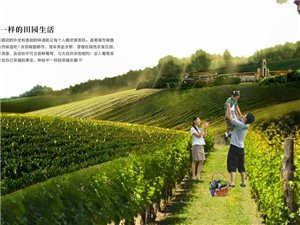 �A�v市首�闷咸�湔J�I�(2015年4月25日―26日)