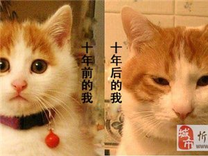 其实猫跟人也是一样的