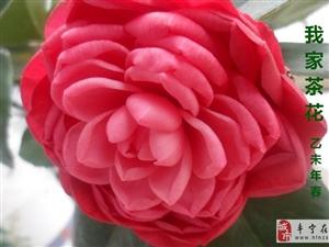 请您欣赏我家的花