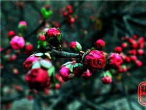 阜��的春很美,那含苞欲放的花骨朵�海�其�善G,更令人留�B!