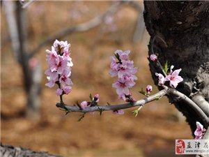 桃花节随拍