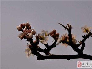 梨花节随拍