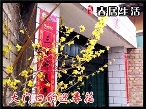春临,人们纷纷都去大坑市场花树售卖地买花