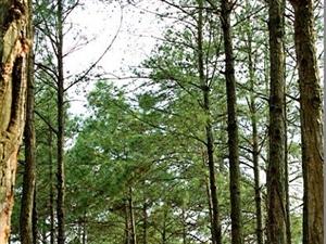 小小树林!