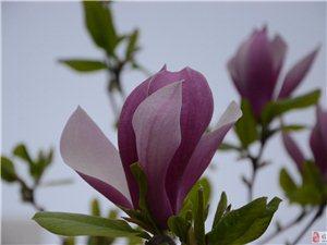 雨后花叶诗