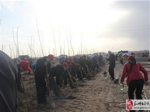 2015瓜州爱心志愿者参与瓜州全民义务植树