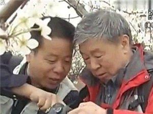 河北台报道-澳门大小点娱乐梨花节