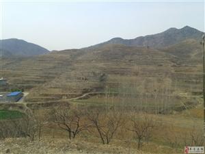 岱岳区道朗北部山区神龙大峡山林果园对外承包转让15753839879