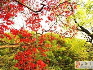 4月18-19号,人间芳菲四月天,银树沟里看杜鹃,登小华山休闲之旅!