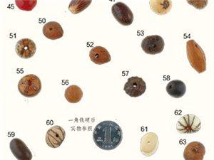 菩提子的品�N介�B�c��欣�p......源自《佛珠收藏�b�p指南》