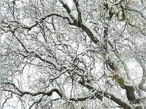 云南多地�w花又�w雪