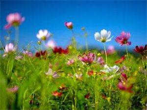 春天花会开——大美永城·春