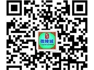 陵城爆料-陵城区微信步入微站时代