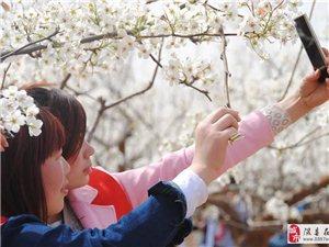 梨�l之春