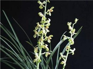 长沙获第27届中国兰花博览会承办资格