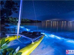 澳大利亚现蓝色荧光海滩 唯美如奇幻世界