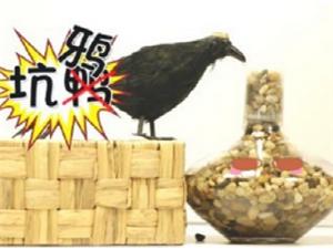 【真相】乌鸦喝水的故事,求真相!