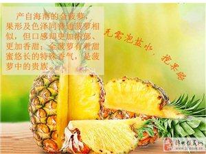 海南三亚新鲜采摘金菠萝 凤梨 无眼菠萝 20斤包邮