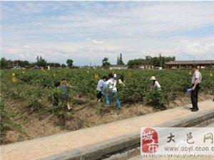 巴蜀笑星田长青走进了大邑都市现代农业园区蓝莓博览园