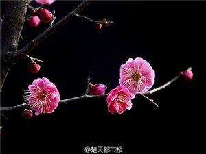 中国十大名花排序,你知道吗?