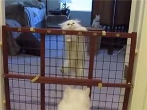 幼猫努力学爬栅栏 猫妈拥抱给奖励