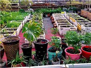 我家的小菜园又是小花园