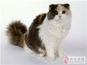养护猫猫需要注意好哪几点