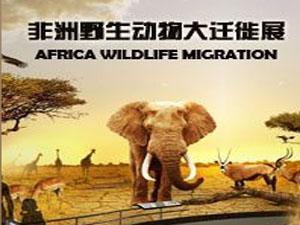 《莘县在线》网特别策划•《亲子游之非洲草原野生动物大迁徙展》