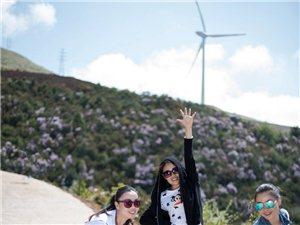 会东旅游:海坝杜鹃正值盛开时。