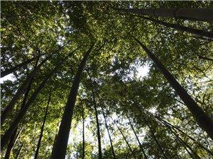 滁州植物交流群将举行第一次户外活动――《双洪生态文化公园》