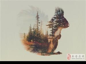 将森林随身携带的动物们