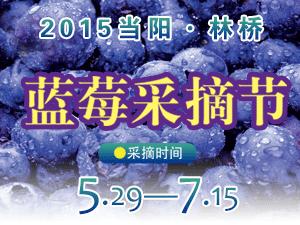 2015林�蛩{莓采摘�!
