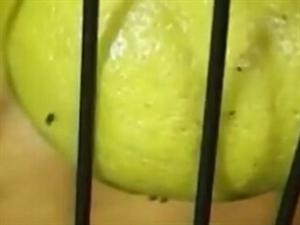 夏天水果容易招小虫子怎么办  ?? 交你两招!