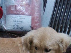 寻找爱犬肉肉